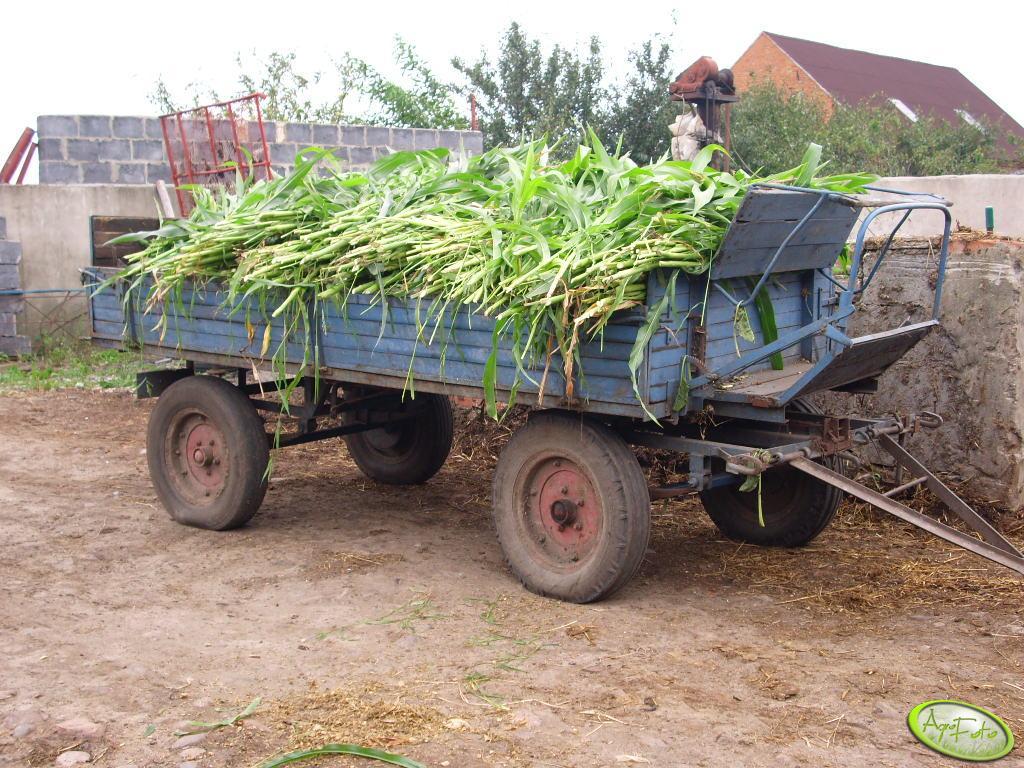 Przyczepka i kukurydza