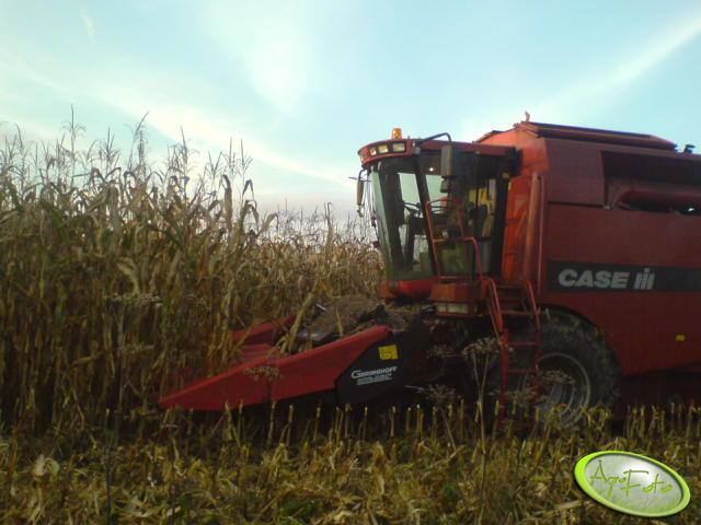 Case cf w kukurydzy