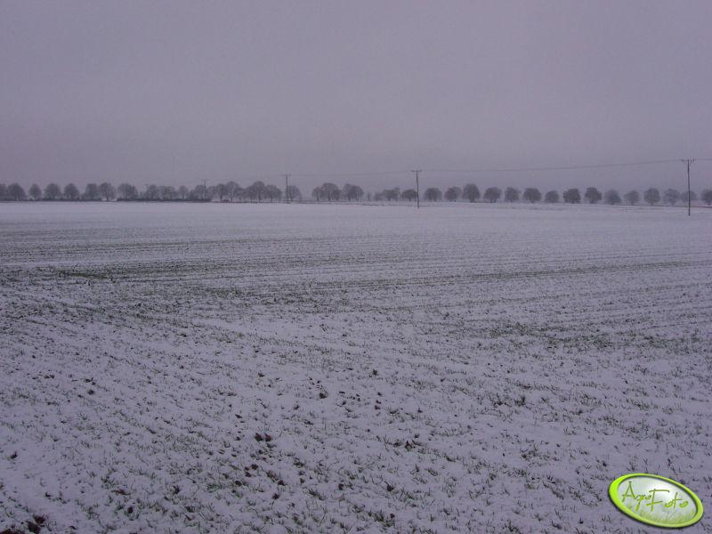 Pszenica pod sniegiem