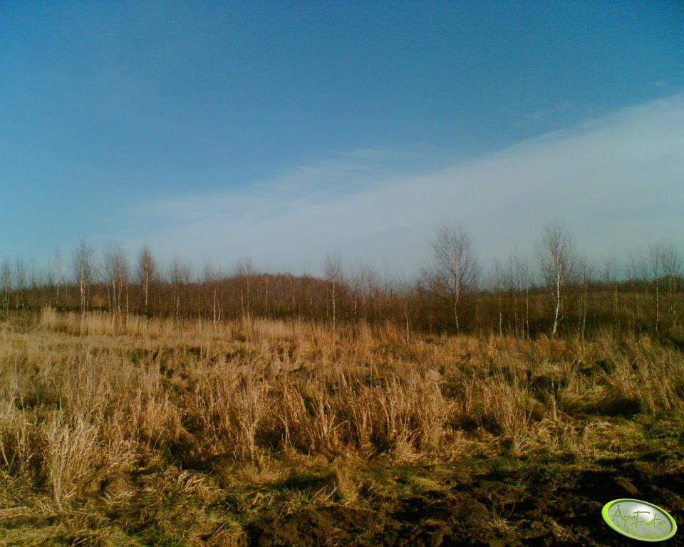 Lasek i trawy