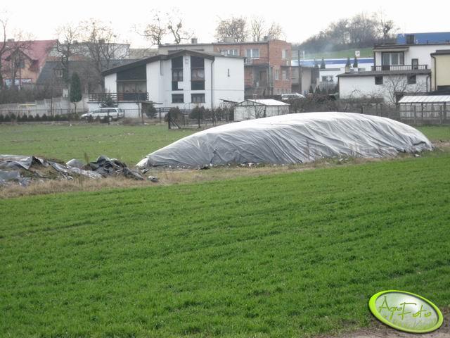 Kiszonka z kukurydzy 2007