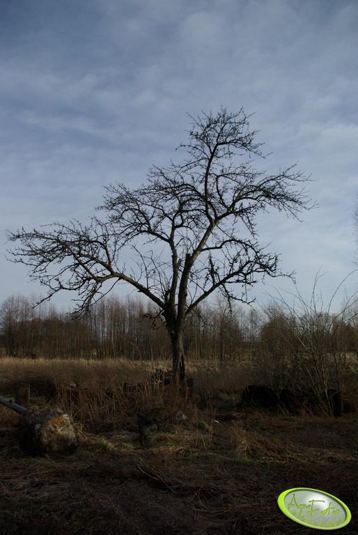 Łąka - jabłonka
