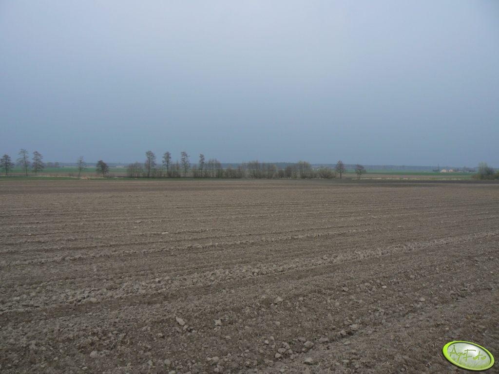 Zaorane pole pod ziemniaki