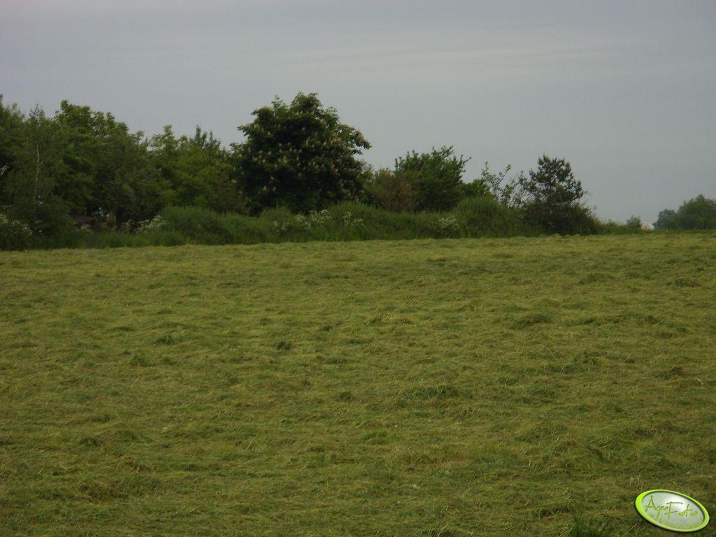 Łąka z pokosami