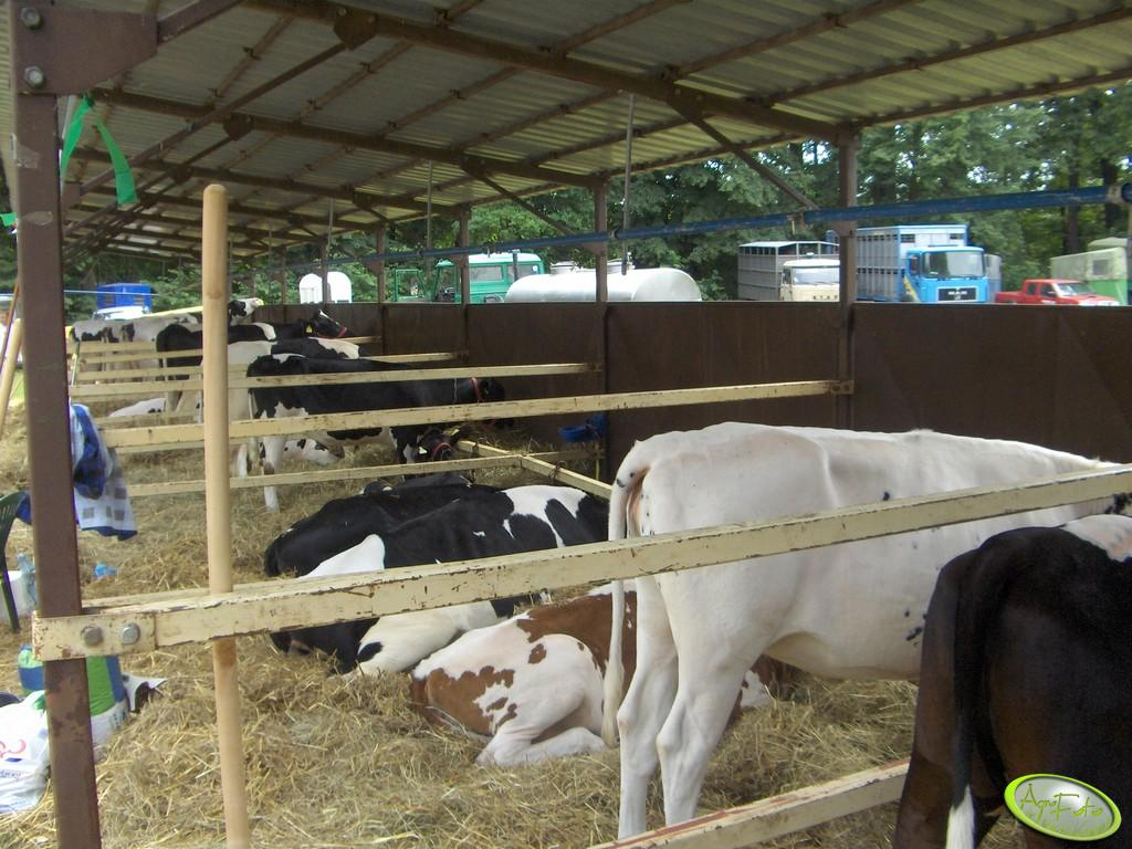 Boksy dla krów