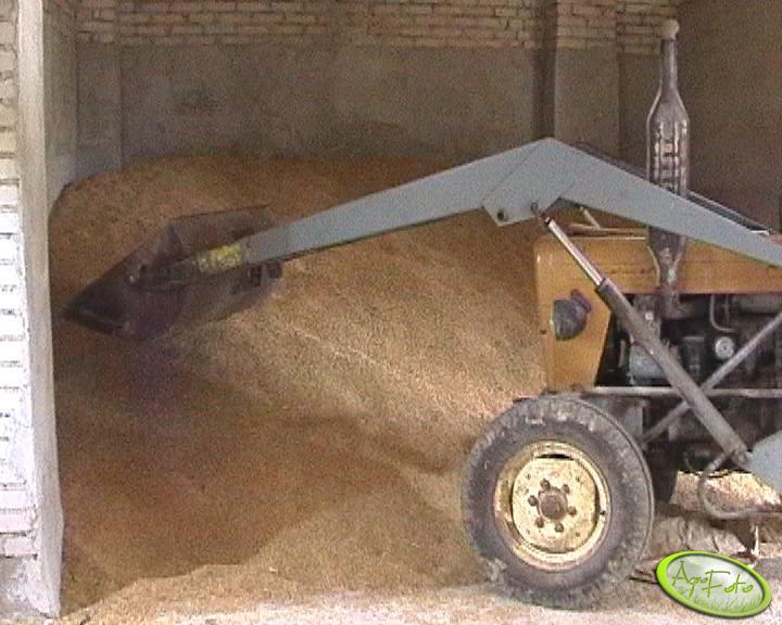 pszenżyto w stodole