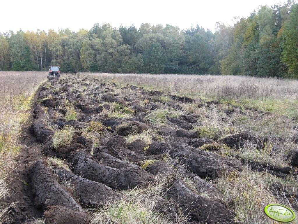Zaorana łąka