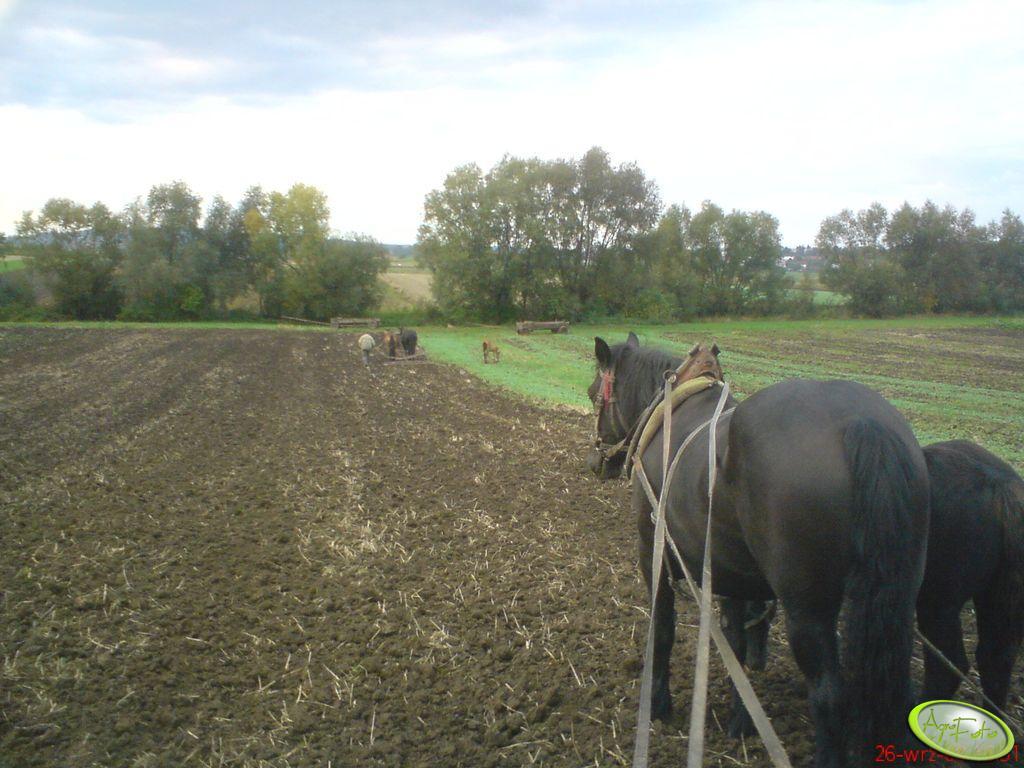 Konie - bronowanie