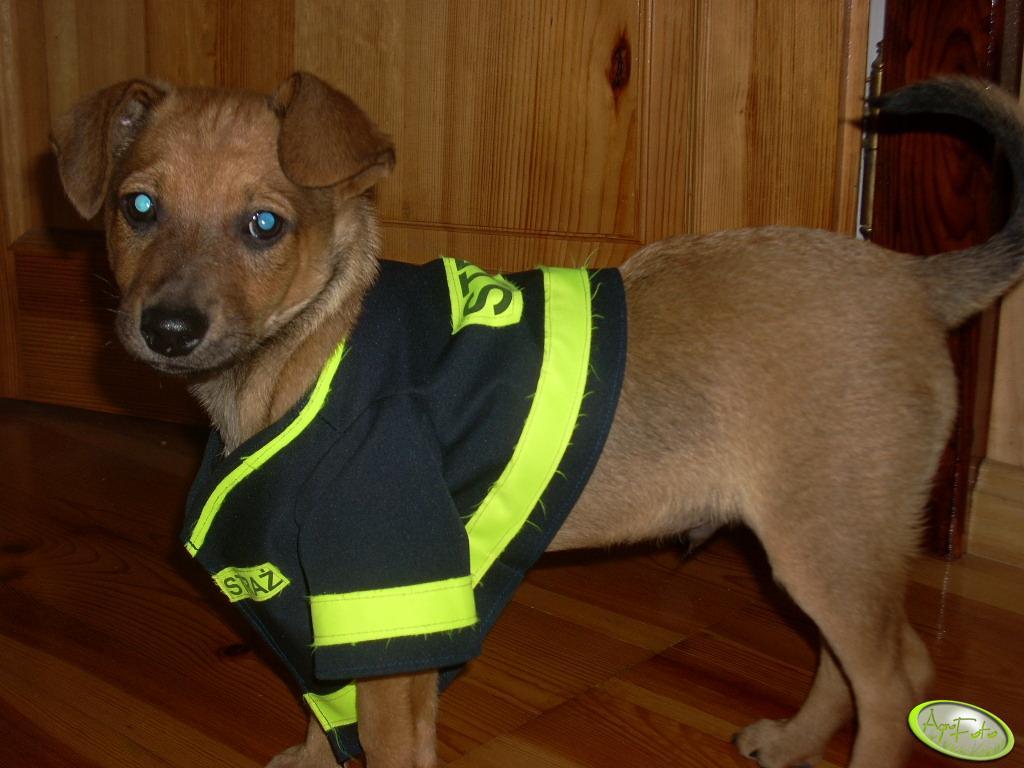 Pies strażak