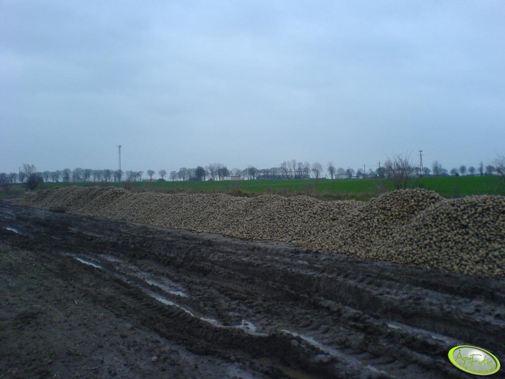 Ziemniaki Przemysłowe - Sprzedam