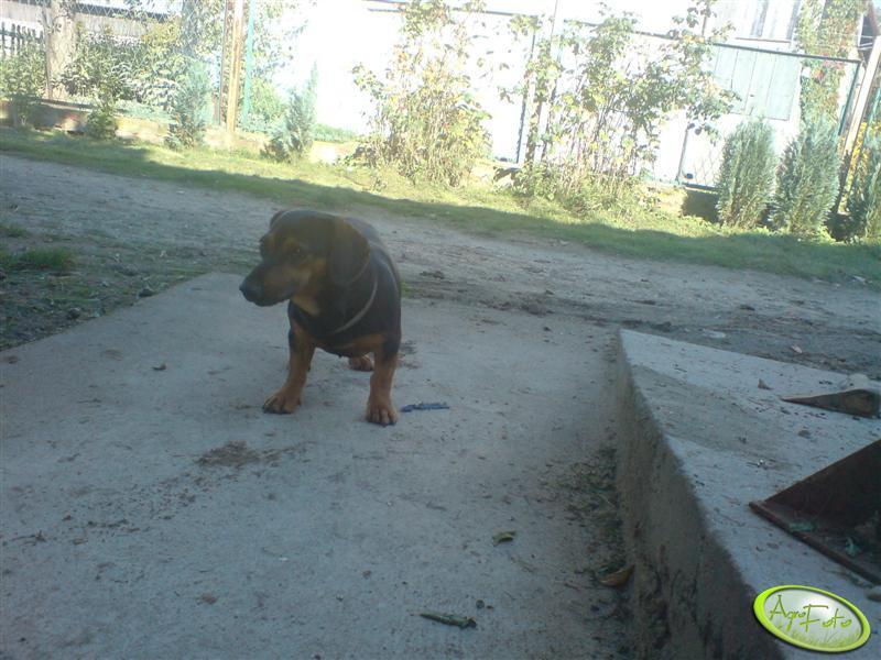 Maxik