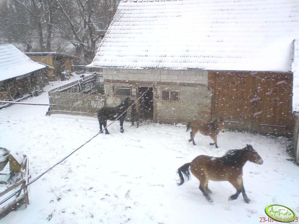 Konie razem