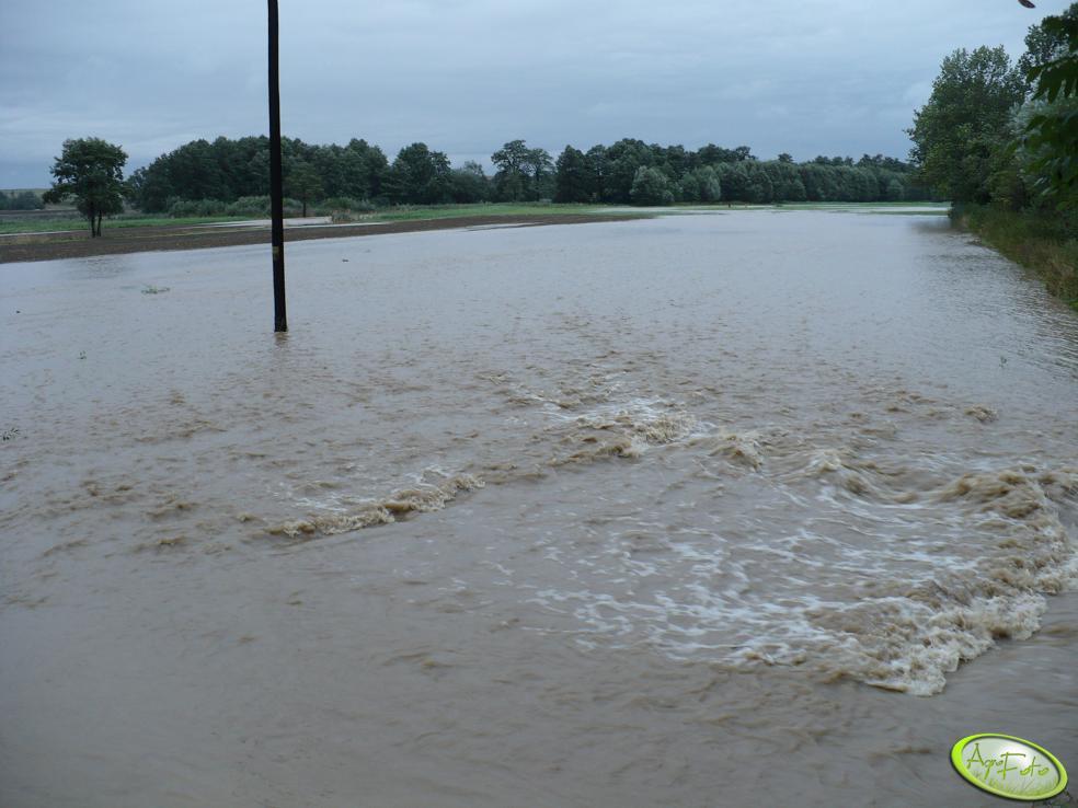 Rzepak zalany przez wode 2007 jesień