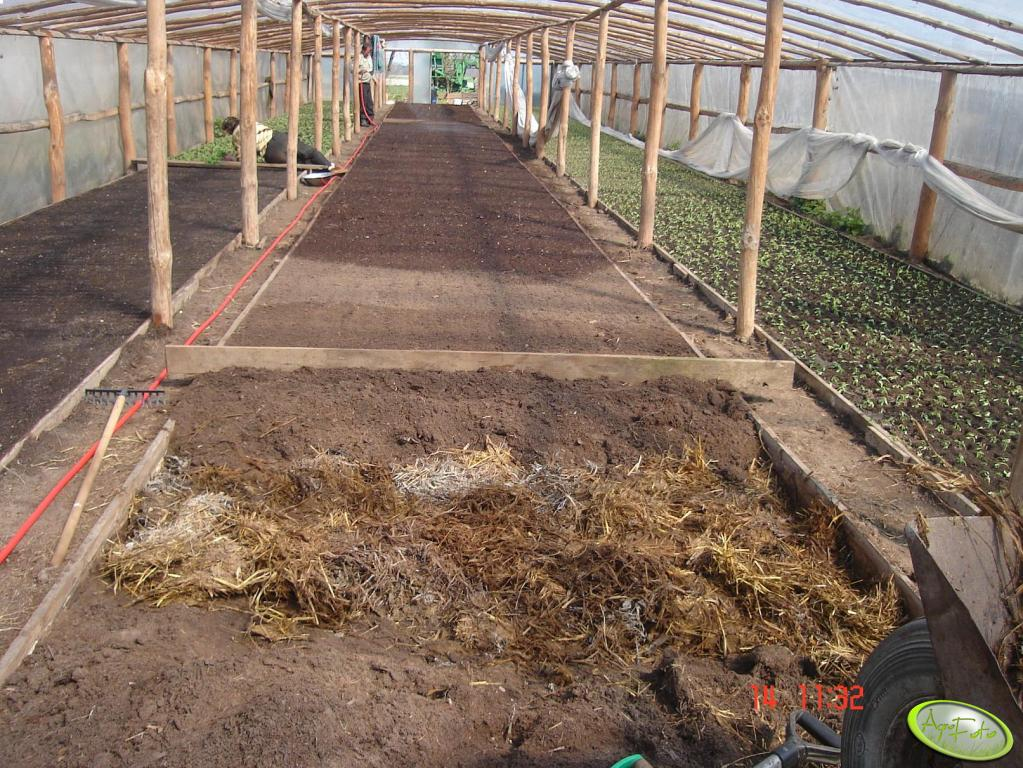 Rozsada pomidora gruntowego