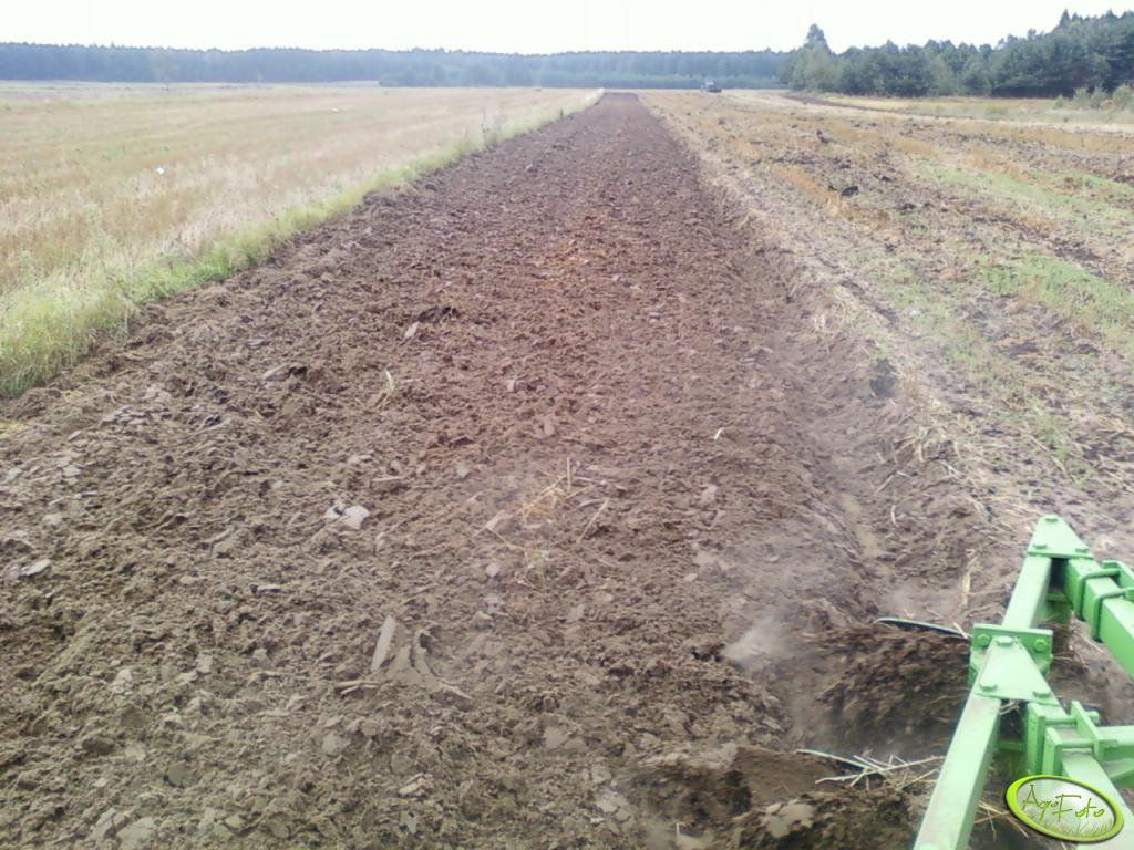 Zaorane pole pod żyto