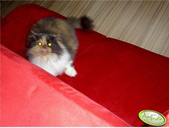 Mitzi w ataku