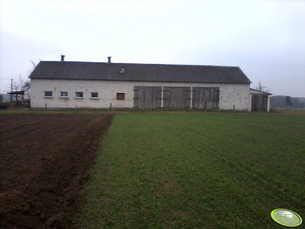 Chlew i stodoła
