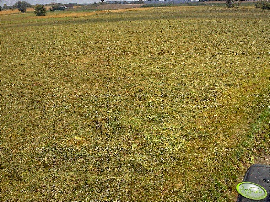 Trawa po roztrząsaczu