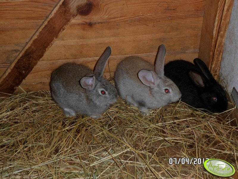 Kilka moich królików