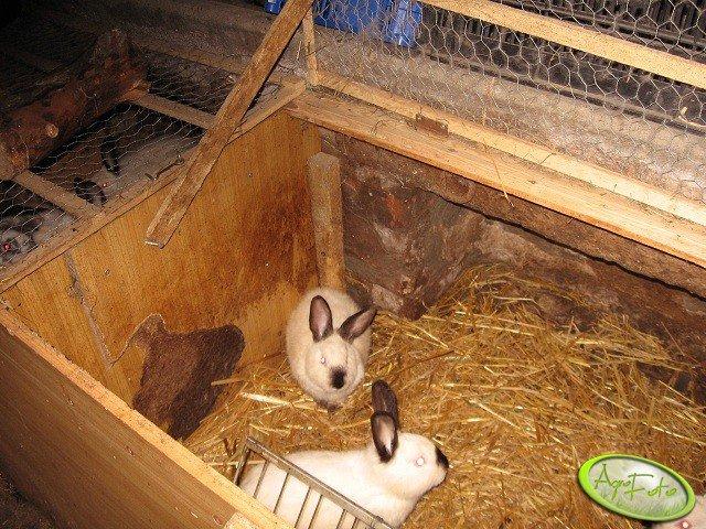 Kojce dla królików