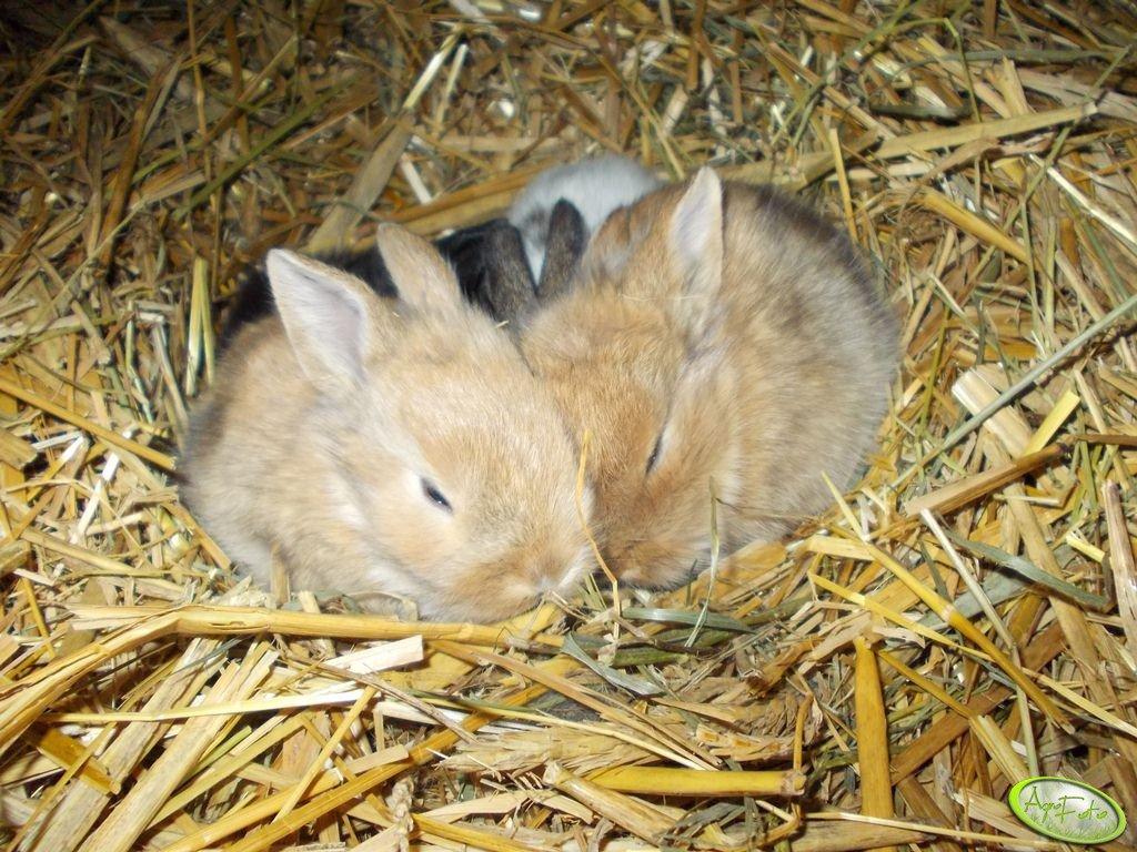 Małe króliki