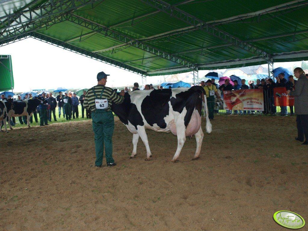 Wystawa bydła