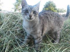 Kocica na sianie