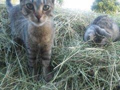 Kocice