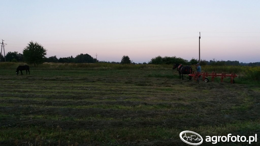 Koń i Źrebak