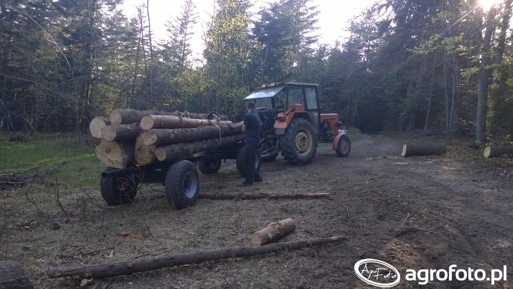 Wywoz drewna