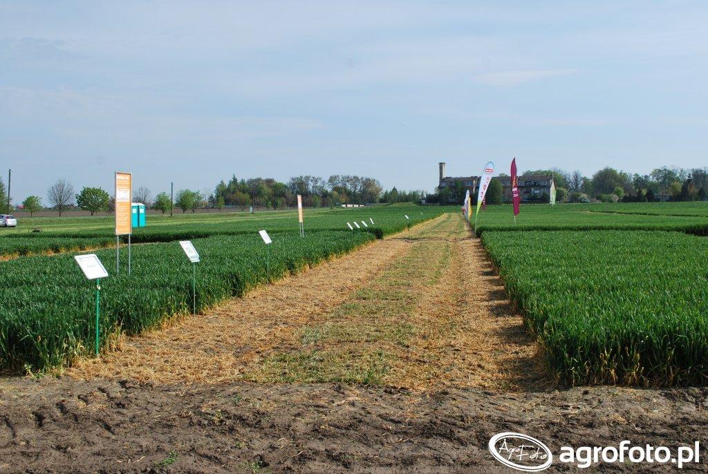 Agro akademia BASF Pągów