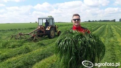 Coraz lepsze łąki na Podlasiu! Pierwsze pokosy z trawami Barenbrug.