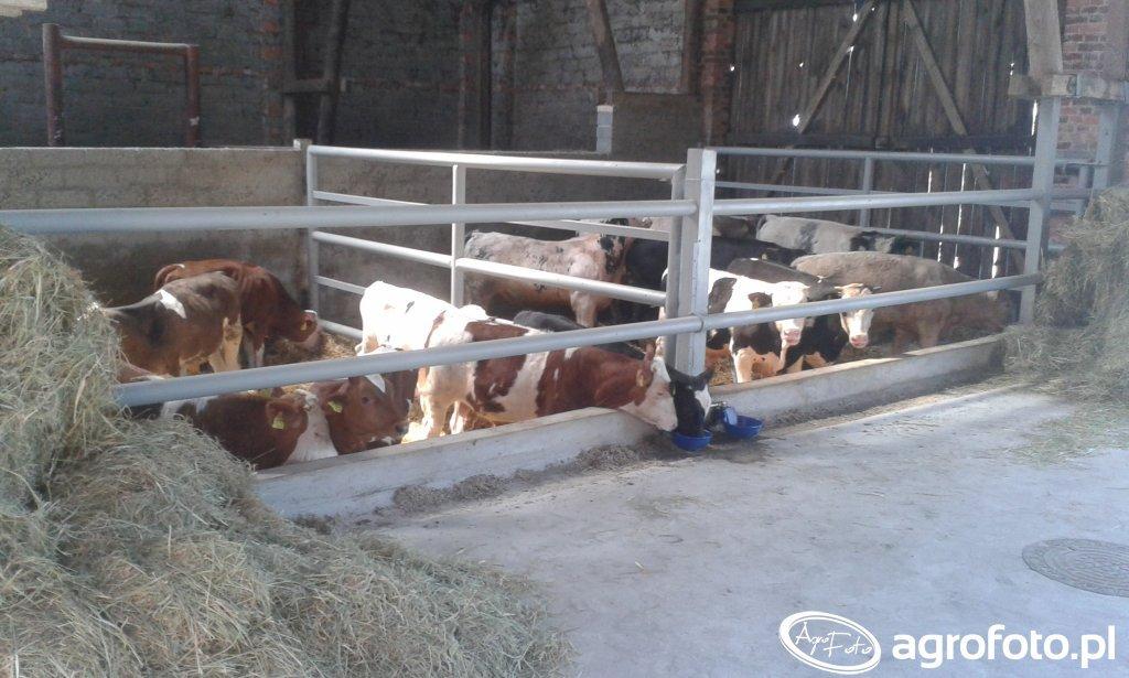 Byczki w stodole po przebudowie