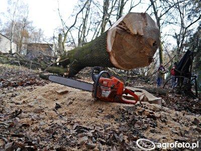 Wycinka drzew zagrażających budynkom