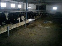 Kojce dla byków