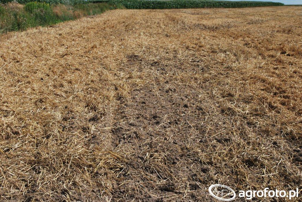 Tak wygląda pole po przejeździe broną.