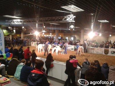 Mazurskie Agro Show 2016 - wystawa zwierząt
