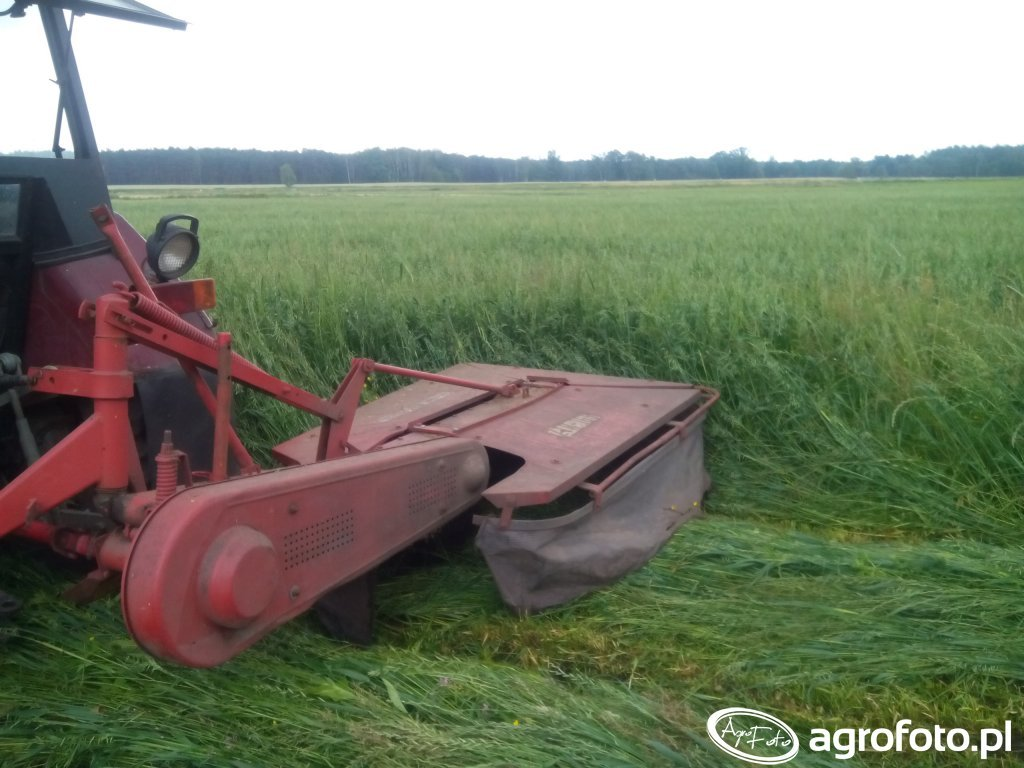1 Pokos młodej trawy