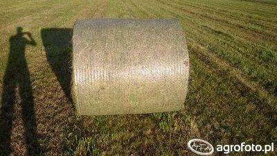 Podsuszona trawa