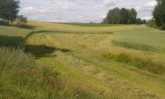 Owies z trawą na kiszonke