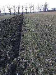 Uprawa pod nową łąkę