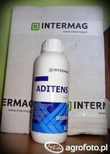 Nagroda: Aditens - Intermag