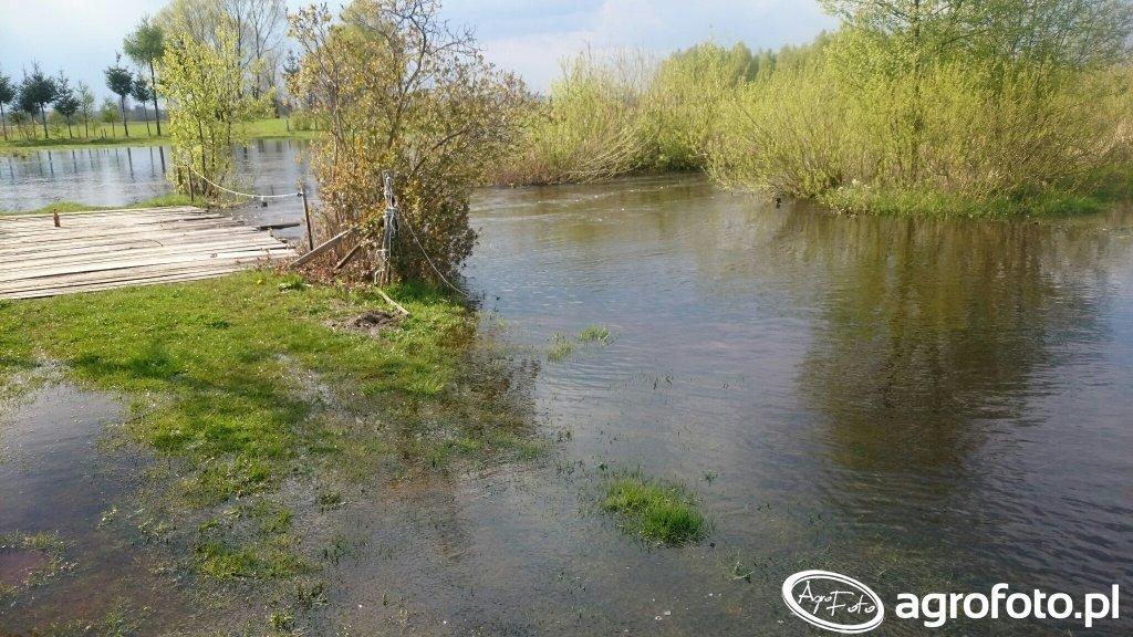 Rzeka na łące