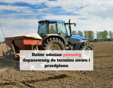 Dobór odmian pszenicy dopasowany do terminu siewu i przedplonu