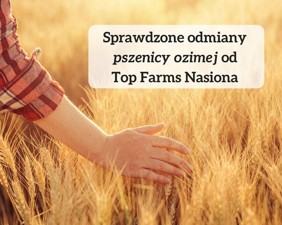 Sprawdzone odmiany pszenicy ozimej od Top Farms Nasiona