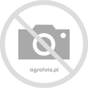 Lamborghini Grand Prix 95 + Lampo 70