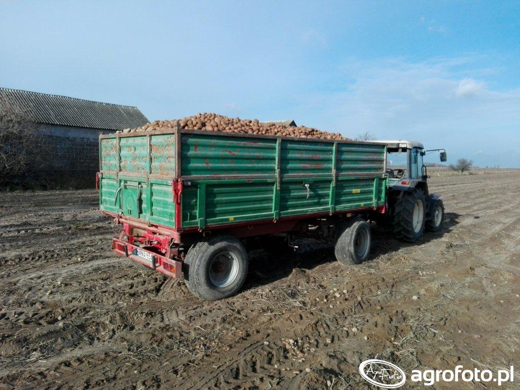 Ziemniaki dla bydła