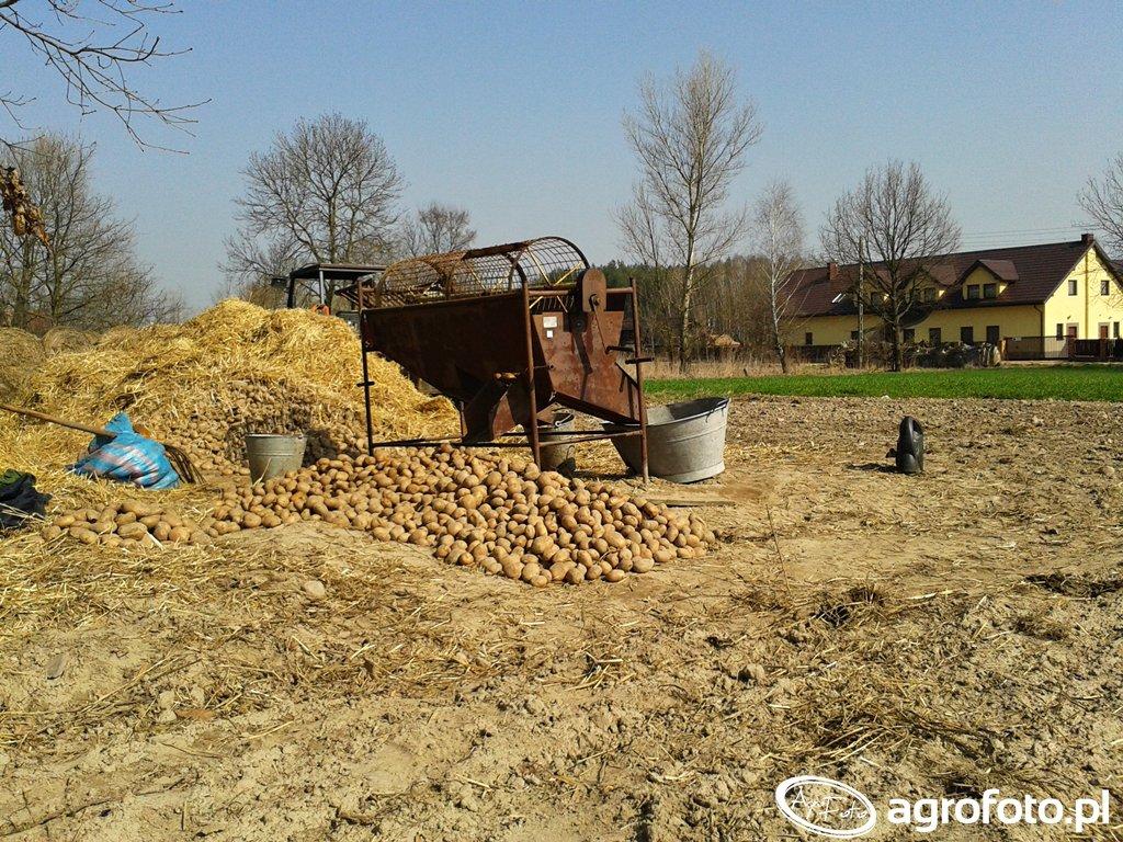 Sortownik do ziemniaków