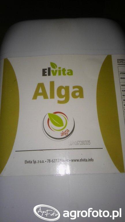 Elvita Alga