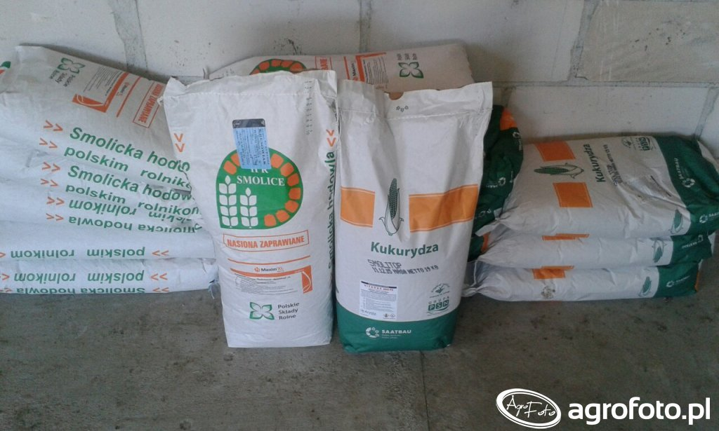 Kukurydza Kresowiak i Smolitop